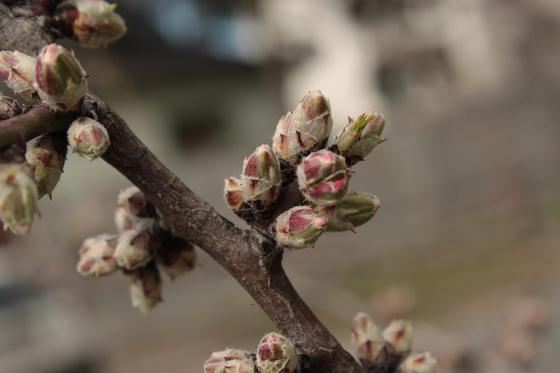 tavaszi_rugy